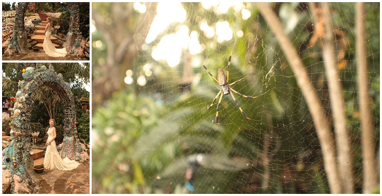 Spiders... big spiders