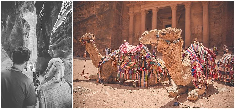 camels rest in front of Al Khazneh, Petra, Jordan